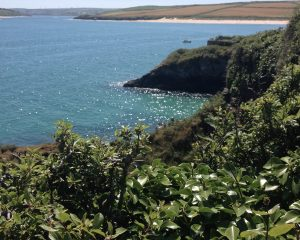 Beautiful Padstow....on the path to rest a while tea garden